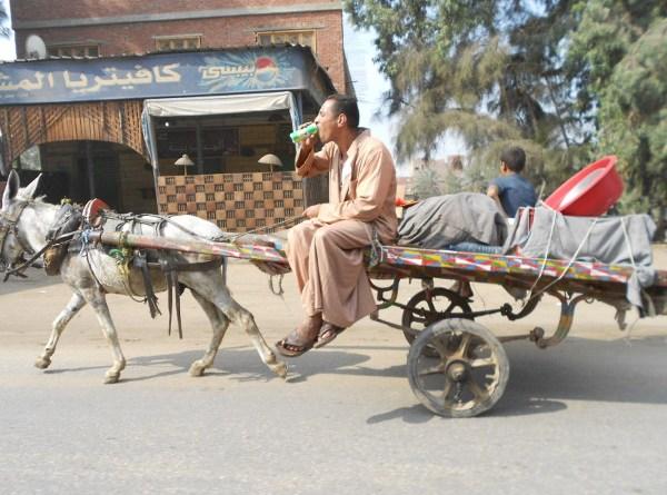 Cairo donkey cart - The Pepsi Chgallenge