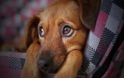 Día Mundial del Perro: ¿Cuál es su historia y por qué se celebra este 21 de julio?