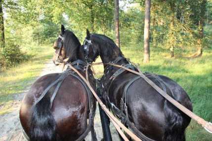 Een ritje door de bossen van het Dwingelderveld