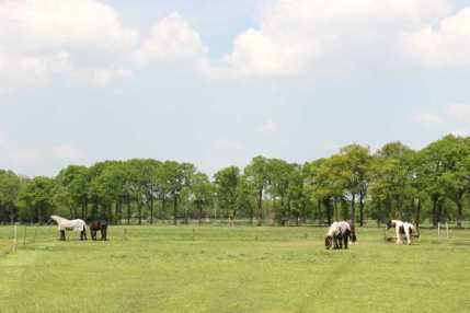Voor de paarden is er een frisse weide rondom het huis.