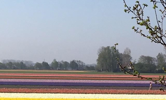 Villa Ruigenhoek De Zilk Noordwijk Zuid-Holland