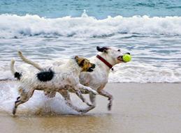 De hond mee op vakantie