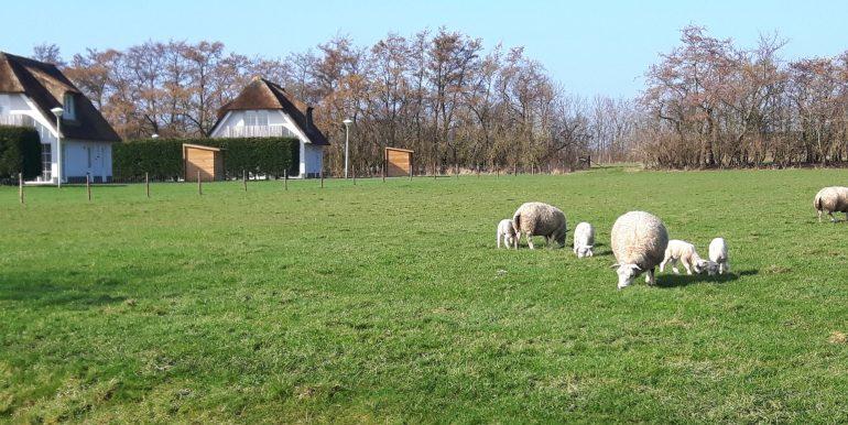6-Persoons Villa Waddenduyn Den Burg Texel | Waddenduyn 8.02