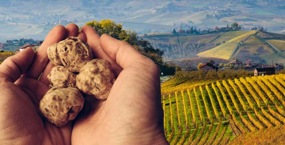 Truffels, het witte goud uit italie