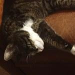 kattenoppas tijdens vakantie