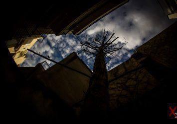 """8. «Άνω Θρώσκω» Σύμφωνα με μία εκδοχή, η λέξη «άνθρωπος» προέρχεται από το «άνω θρώσκω», δηλαδή κοιτάζω προς τα άνω-ψηλά. Έτσι και το δέντρο, που προσπαθεί να ξεφύγει από το """"πνιγμένο"""" αστικό τοπίο και να συναντήσει το φως."""
