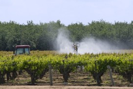 Farmer on tractor spraying grapes with pesticides. Central Valley, California, USA.