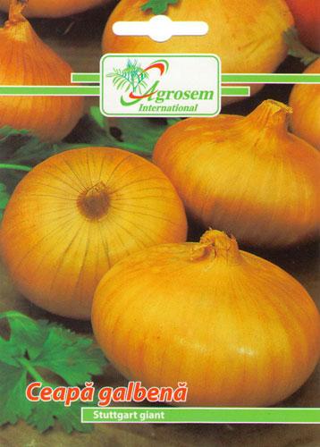 Seminte legume Ceapa Galbena Stuttgart Giant