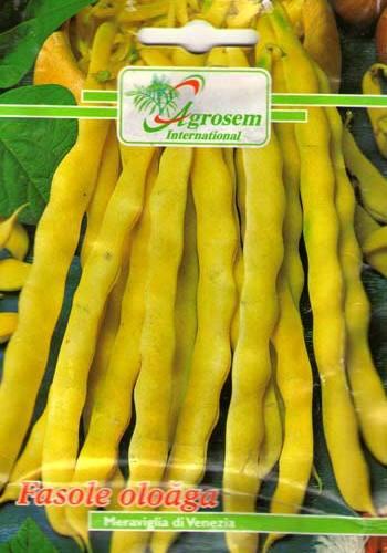 Seminte legume - Fasole Oloaga Meraviglia Di Venezia