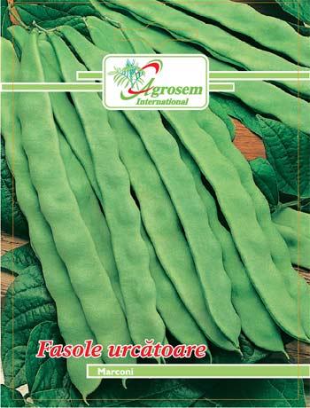 Seminte legume - Fasole Urcatoare Marconi