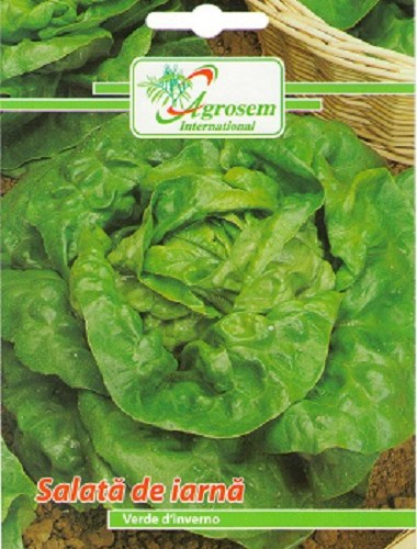 Seminte legume - Salata Iarna Verde D'Inverno