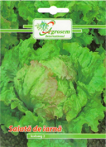 Seminte legume - Salata Iceberg 2