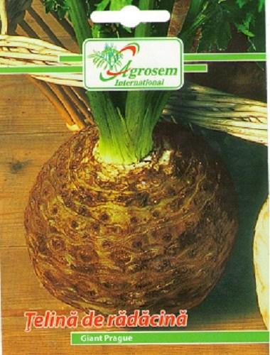 Seminte legume - Telina Radacina Giant Prague