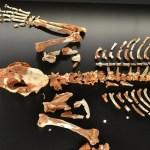 ¿Sabías que el esqueleto más completo de un leopardo prehistórico se encuentra en Valencia?