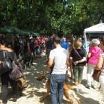La Valencia Solidaria: Feria Animalista Valencia 2016
