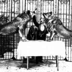 Los leones que causaron el terror por las calles de Valencia en enero de 1900