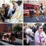 La fiesta de San Antonio Abad y la bendición de animales regresa a la calle Sagunto de Valencia