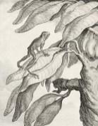 Planche de Sève tirée de Bernard Germain Étienne de La Ville sur Illon de La Cépède (1788). Histoire naturelle des quadrupèdes ovipares et des serpens. Tome premier