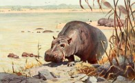 Illustration de Wilhelm Kuhnert (1865-1926) tirée d'Otto zur Strassen (1920). Brehms Tierleben: allgemeine Kunde des Tierreichs. Säugetiere. Vierter Band, Bibliographisches Institut (Leipzig)