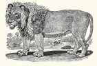 Thomas Bell (1791). A General History of Quadrupeds, S. Hodgson, R. Beilby and T. Bewick (Newcastle)