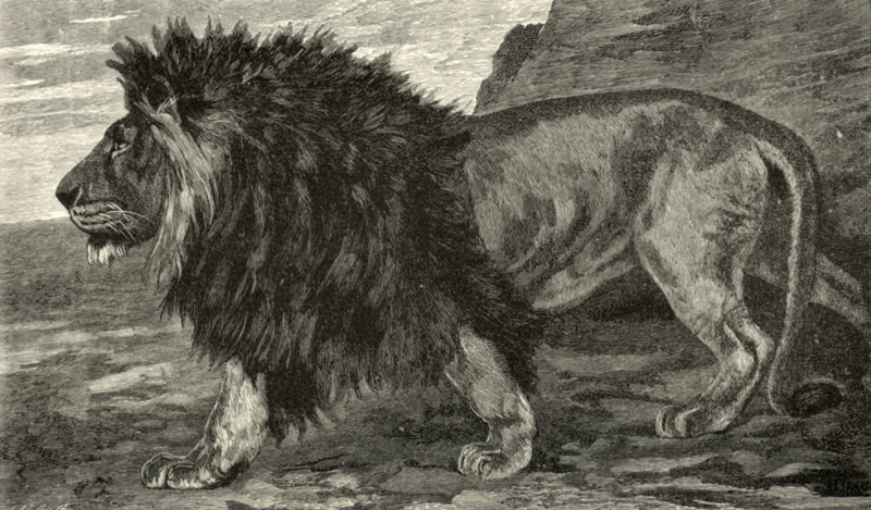 Samuel White Baker (1890). Wild Beasts and their Ways: Reminiscences of Europe, Asia, Africa, and America, Macmillan and Co, Limited (Londres)