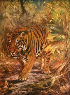Illustration de Cuthbert Edmund Swan (1870-1931) tirée de Frank Finn (1909). The Wild Beasts of the World [volume 1], T.C. & E.C. Jack (Londres et Édimbourg)