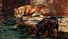 Rencontre autour d'un point d'eau, illustration d'E.F. Caldwell tirée de Frederick George Aflalo (1912). A Book of the Wilderness and Jungle, S.W. Parttridge & Co., Ltd. (Londres)