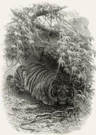 Illustration extraite de Walter Campbell (1864). My Indian Journal, Edmonston & Douglas (Édimbourg)