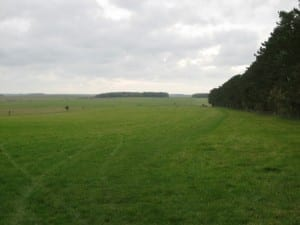View of Stonehenge cursus which continues through gap in trees on horizon