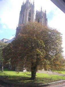 M autumn V's window