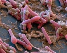 microbiota-microscopio