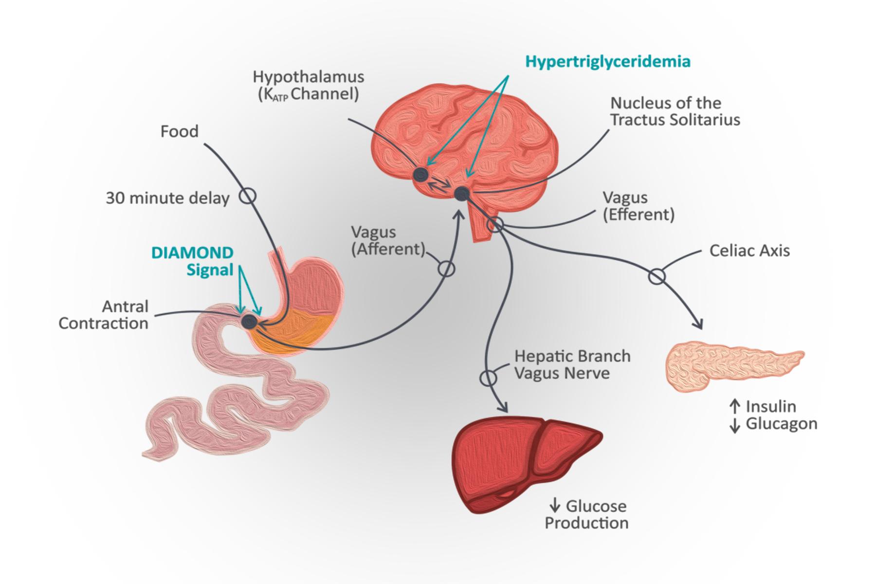 asse-intestino-cervello