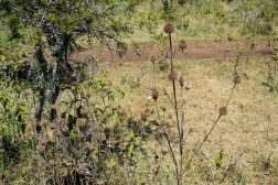 Thorny bushes