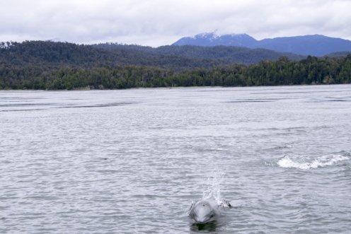 Dolphin San Rafael