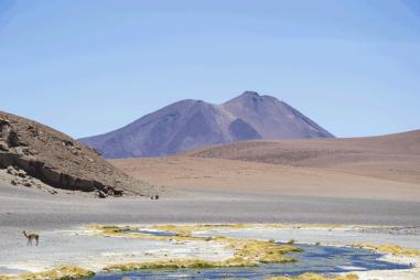Salar de Tara Travel