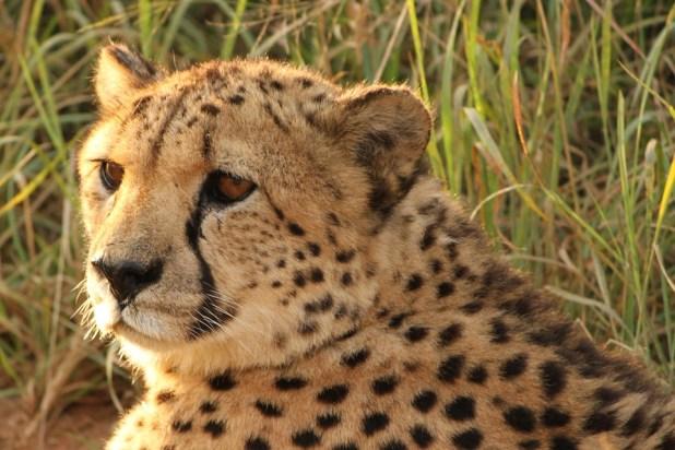 namibia africa