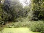 Moseley Bog, a Floresta Velha