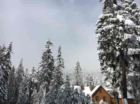 Rainier Winter Hike - The National Park Inn in Longmire