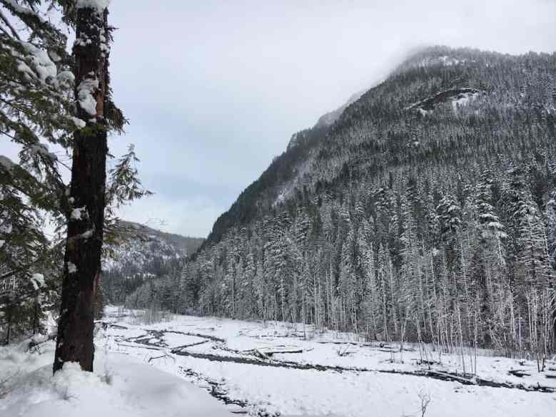 A view across the Nisqually River.