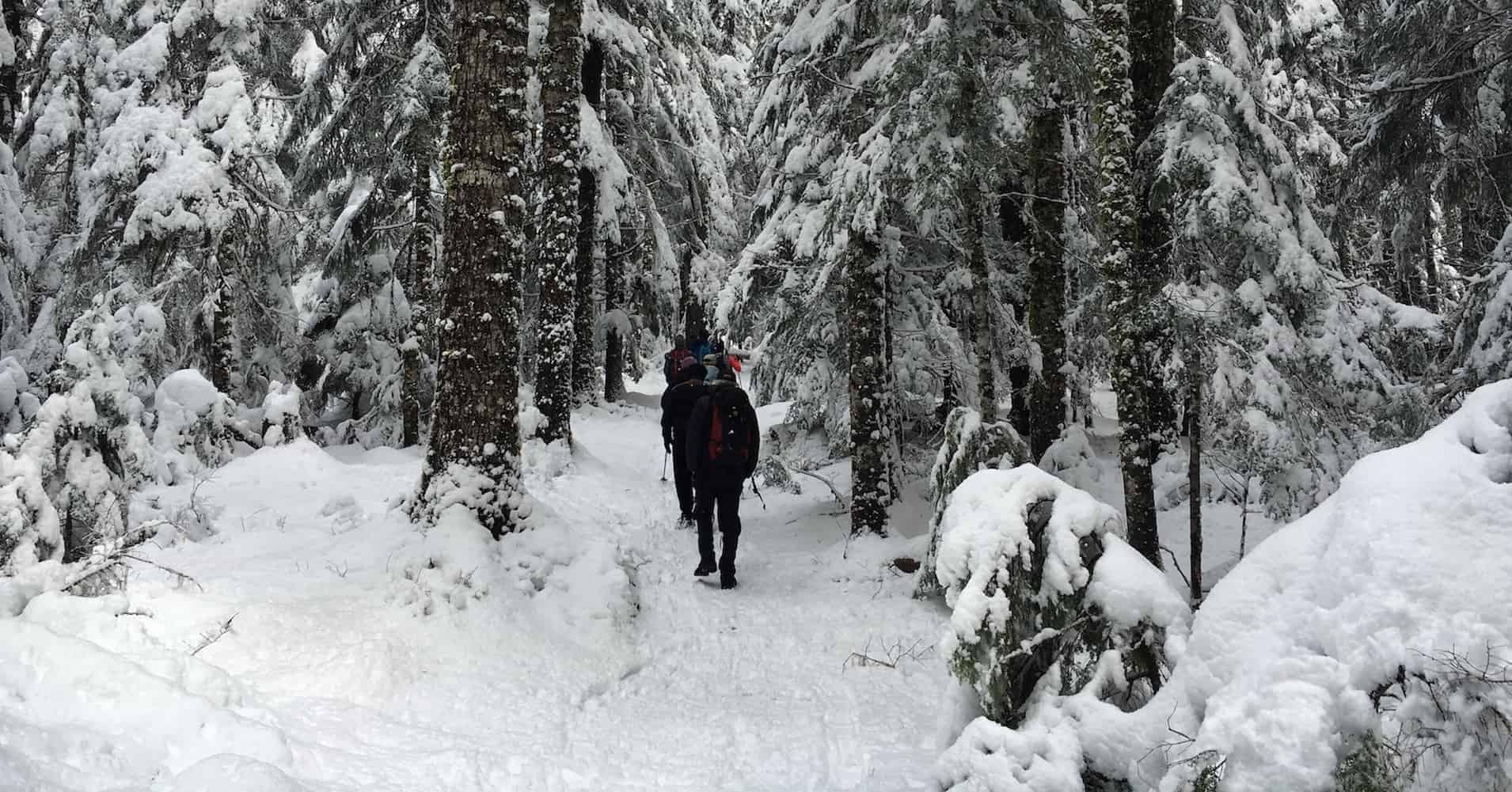 Mount Rainier Winter Hike Featured
