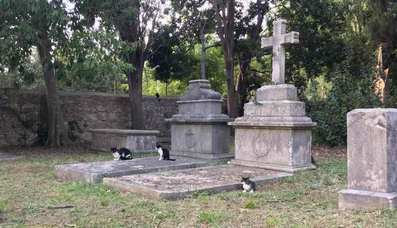 A family of cats in a Dubrovnik cemetery.