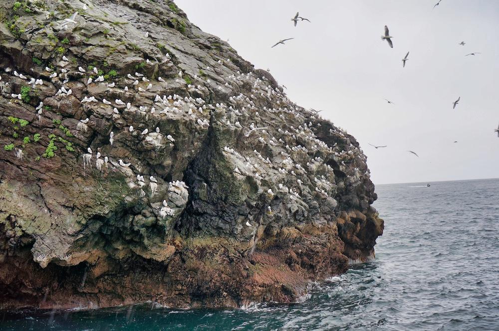 Seabirds in Kenai Fjords National Park