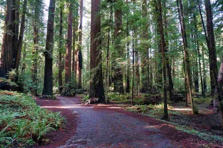 California Redwoods - Womens Grove