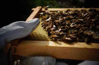 40 Before 40 - Beekeeping 1
