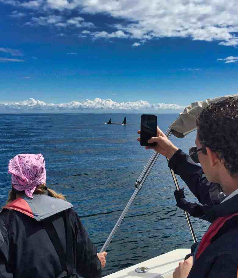 San Jan Islands - Whale Watching