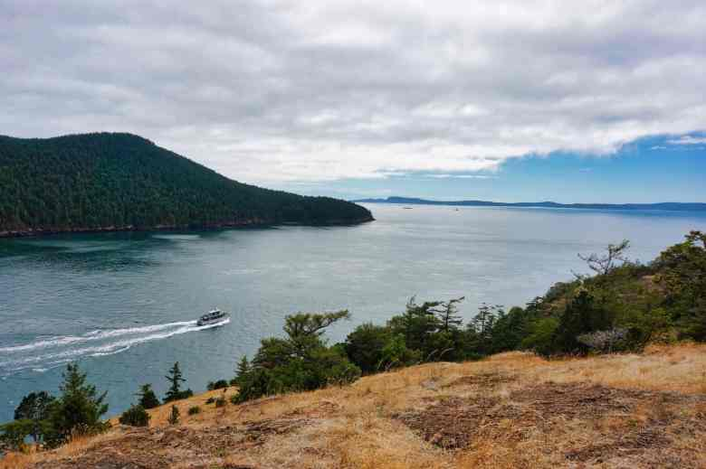 Anacortes Travel Guide - Whale Watching