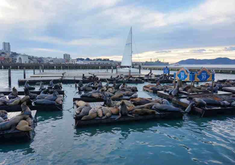 3 Days in San Francisco - Pier 39