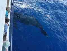UnCruise Hawaii - Day 4 - Humpback Whale
