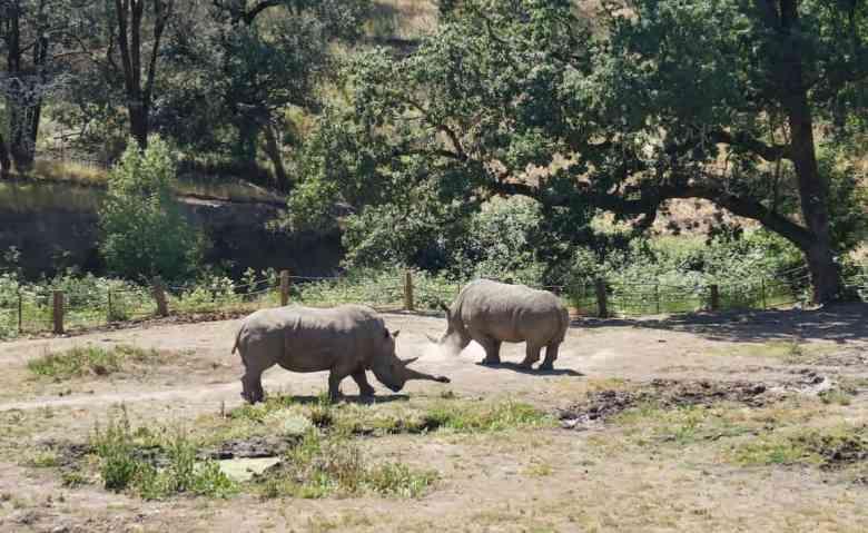 Santa Rosa Trip - Safari West Rhinos