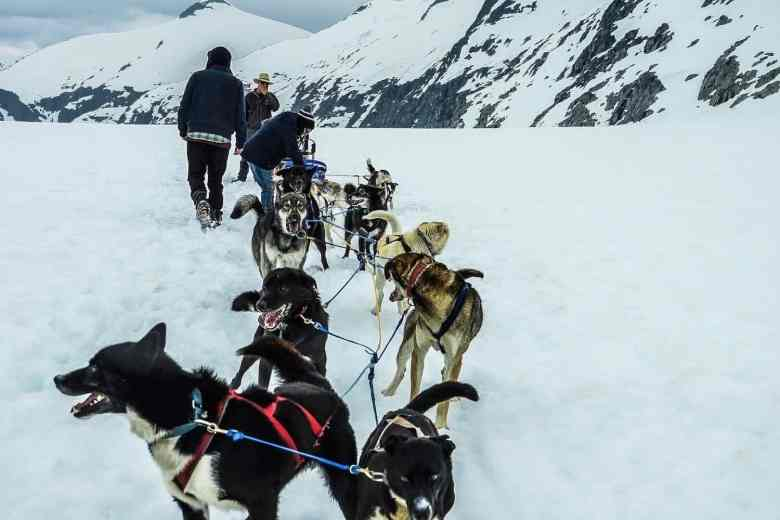 Juneau Cruise Excursions - Glacier Dog Sledding